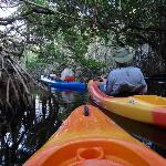 Winding our way through the mangroves