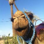 Camels at Palmeraie