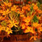 Veuve Cliquot Flowers
