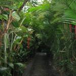 the walkways