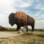 BIG buffalo!