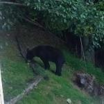 Bear viewing from the deck.