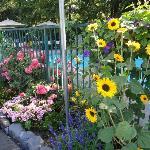 Nice gardens and pool