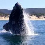 Whale watching available in season