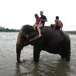 Elephant bath (Chitwan)