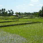 Aussicht aufs Reisfeld