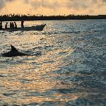 Swimming with Dolphins. A trip worth doing.