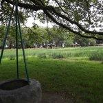 tyre rope swings