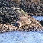 Seal Island, Victoria, B.C.