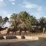 Camels waiting for passengers