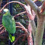 Papagei im Vogelpark Niendorf