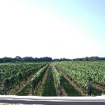 View of the vineyard from their deck. Which has table and chairs to sit and enjoy their wine.