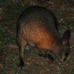 Animals seen on the night walk