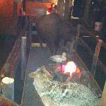 Buckaroo Bills - campfire and wildlife