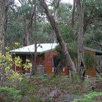 Bushland setting