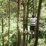 At Tree Top