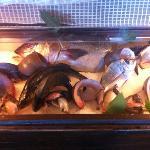 il pesce e' fresco