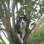 surprise dans un des arbres!!