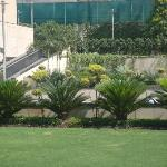 Grounds View