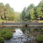 The swimming hole/lake/stream at the main park area of Loleta