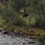 Moose behind the camper
