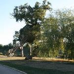 la cabane dans le chêne