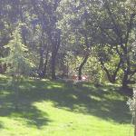 il giardino con lettini e tavolo ping pong