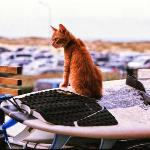 The resident cat, 'Flea', keeping an eye over the carpark.