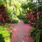 Beautiful garden (walk way from room to the pool and dock)