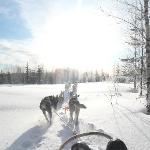 Husky safari through snow covered landscape