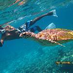 Big sea turtle!