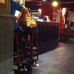 downstairs @ pub with bored local dog