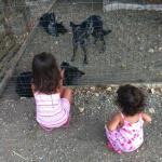 L'incontro con i cani
