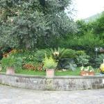 Un angolo di giardino con uno dei tanti cycas in fiore