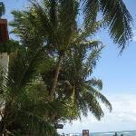 Beach (Banana Garden)
