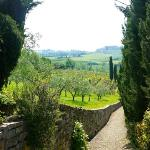 Path to olive grove and vineyards