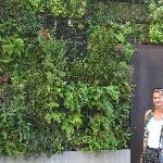 "Be sure to check out their ""living wall"" adjacent to their firepits."