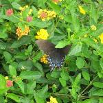 Butterfly enjoying the garden