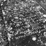 A frosty grave stone in the graveyard close by