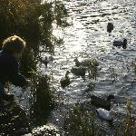 Feeding the ducks at the lake: plenty of them and they are very tame.