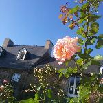 rose de septembre