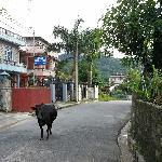 de rustige straat van het hotel