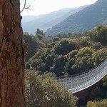Hanging Bridge at Nesher Park Foto