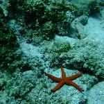 Starfish on one of the dive sites