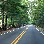 The roadway into Lake Eden Events is beautiful and leafy.
