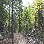 This pet-friendly trail behind our hotel connects to the Bonfils trail system and Resort