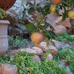 L'abero delle mele