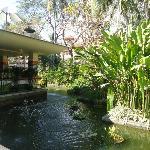 Pond near the breakfast area!