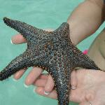 starfish found