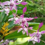 Orchids after the rain